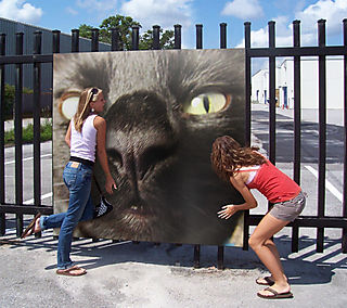 PhotoFunia_railings
