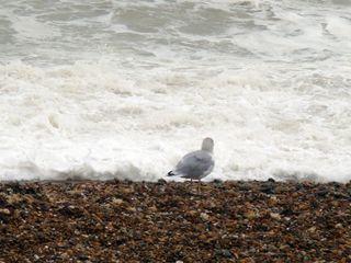 October 5 gull