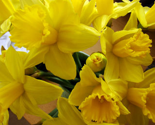 Feb22daffs