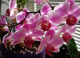 Still_flowering