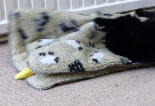 Cat_banana_4