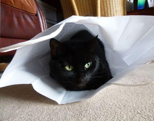 Paper_bag