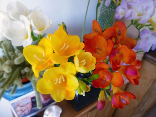 Freesias_1