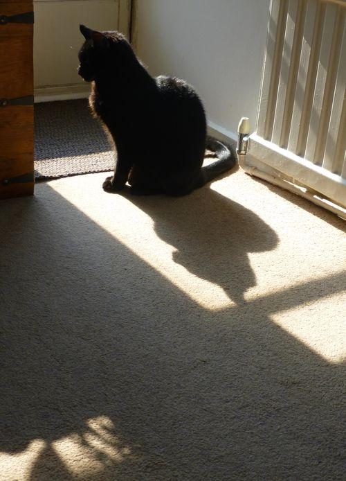 Flossie_shadows