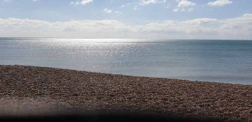 Sea_shingle