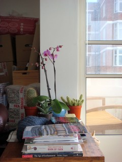New_orchid_2