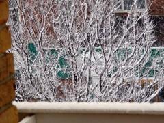 Snow_1135