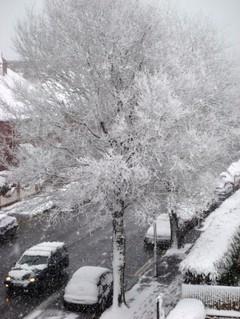 Snow_tree_1136