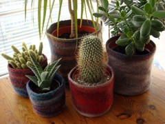 Pots_with_plants