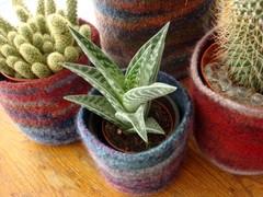 Pots_with_plants_detail