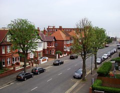 Trees_in_hove_street_after