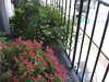 Balcony_left