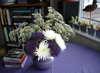 Purple_flowers_1